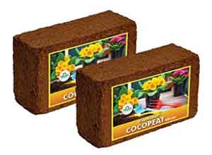 TrustBasket COCOPEAT Block 650 Grams